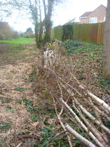 The newly laid hedge December 2015