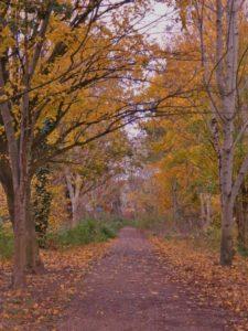 "alt=""autumn colours alongside a Bradpole parish footpath"""