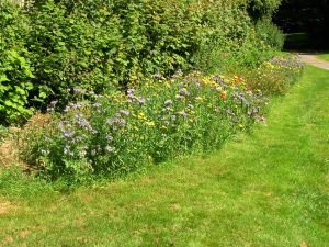 """alt=""""our volunteer wildflower group are bringing summer colour to our green spaces"""""""